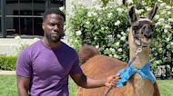 Kevin Hart Freaks Out Over Pal Nick Cannon Sending A Llama To His House: 'Birthday War Pranks Are On'