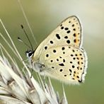 Butterfly by Flickr user Ger Bosma