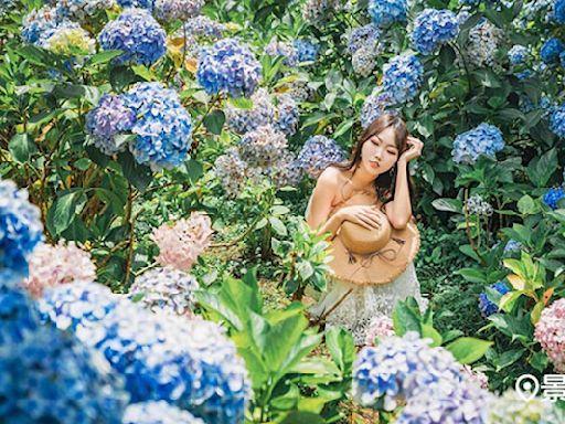 絕美繡球花仙氣滿開!全台35大賞花景點 | 蕃新聞