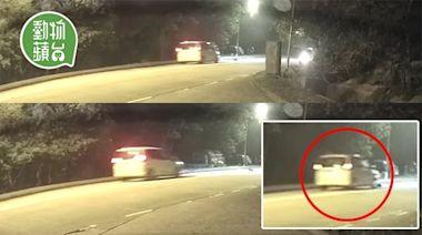路殺浪浪|車輛大帽山撞到犬隻不顧而去 兩幼犬不幸身亡 | 蘋果日報