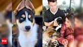 Priyanka Chopra and Nick Jonas extend their family, welcome new pup Panda - Times of India