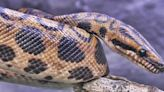 Asteroid that decimated dinosaurs determined success for these snakes, study points out - Bolivar Commercial