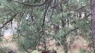 Horse hangout in Ruidoso