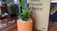 Wary of buying your plants online? Here's a guide to help