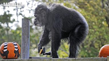 三藩市北美洲最年老黑猩猩去世 享年63歲 | 大視野