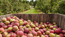Where to go to pick apples in the Hartford area