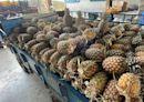 糗!鳳梨+芭樂+香蕉外銷頻出包 挨批炒短線害的 | 蘋果新聞網 | 蘋果日報