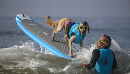 Photos: Ruff waves at the annual dog surfing competition in Huntington Beach