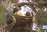 Tree-Sitters Take On PG&E In Nevada City