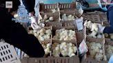 2.6萬隻小雞遭遺棄機場3天相繼死亡 飢餓難耐被迫吃同伴維生
