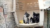 中英對照讀新聞》Cuba approves animal welfare law after civil society pressure 公民社會施壓古巴通過動物保護法- 中英對照讀 - 自由電子報