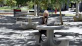 Covid-era education tech narrowed college learning gap for poor, minorities