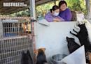 大樹下動物庇護站首位義工燕姐 守護毛孩安享晚年 | 社會事