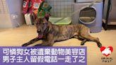 1歲多溫馴狗女被人遺棄美容店 男主人留下假電話一走了之 - 香港動物報 Hong Kong Animal Post