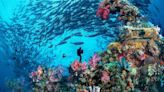 Beautiful underwater attractions hiding in the world's seas
