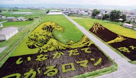 This Japanese village creates amazing paddy field art using different strains of rice
