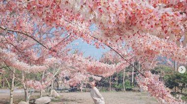 台南龜丹溫泉花旗木秘境!整串粉色棉花糖垂地超夢幻 還能泡美人湯