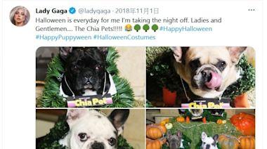 Lady Gaga兩愛犬被搶 照顧員被槍傷