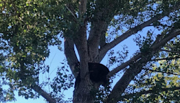 Idaho Fish and Game officers shoot, kill 250-pound black bear in Boise's North End