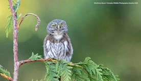 12 Funny Wild Animal Pictures: A Comedy Wildlife Photography Award Preview