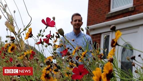 Man's wildflower garden gains Twitter attention