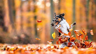 組圖:2021搞笑寵物攝影獎入圍作品