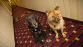 Pet-Friendly Hotel Chains with Low Rates and Low (or no) Pet Fees