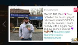 Baltimore Buzz: Ravens Fan Raffles Playoff Tickets For Animals In Need