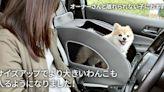 帶毛小孩出門不用再心驚膽跳!本田推出狗狗專屬安全配件