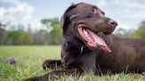 Everything You Need to Know About Pet Insurance Waiting Periods