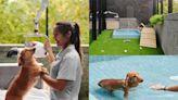 帶毛小孩泡溫泉度假去!宜蘭礁溪「飯店級寵物旅館」住宿美容全包 - 玩咖Playing - 自由電子報