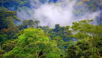 World Rainforest Day: Be amazed by these stunning jungle and rainforest destinations