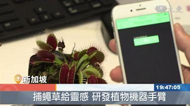植物會溝通 美科學家解讀訊號