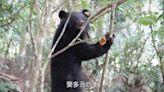 首例! 黑熊照顧後野放 「廣原小熊」紀錄片首映