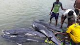 At least 80 dead dolphins washed up on a beach in Ghana, and people have no idea why