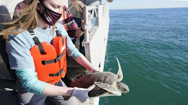 Sea Turtles Released to Gulf of Mexico