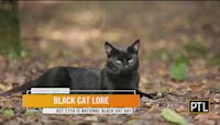 Ask Dr. Mike: Halloween Safety For Pets