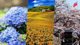 【2021全台最新賞花攻略】櫻花、海芋、花旗木、繡球花、七彩金針花...「春夏必追」夢幻花海!超過40個絕美景點總整理~