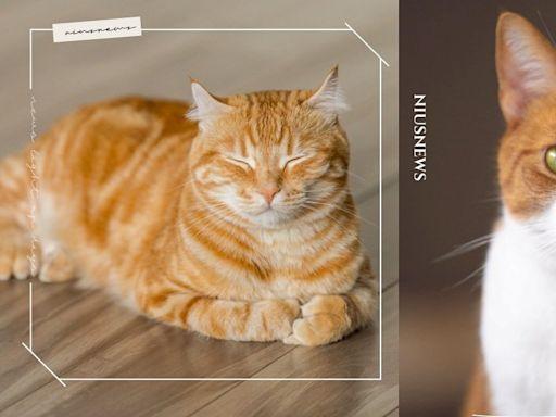 橘貓7大特色分析!「名字很常是食物、體型很巨」你家小橘身材也是阿嬤養的嗎? | 寵物圈圈 | 妞新聞 niusnews