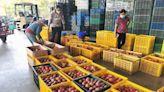 台南芒果節因疫情停辦 市府:產業推廣不中斷