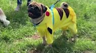 Pooches don costumes for Lima 'Dog-oween' contest