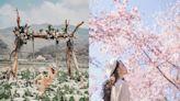 北台灣賞花地圖 6大絕美花海和口罩說掰掰