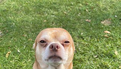 'Haunted Victorian Child' Dog Wins Hearts Via Hysterically Honest Adoption Post