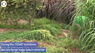 WEB EXTRA: Zoo in Lima, Peru Farms To Feed Animals