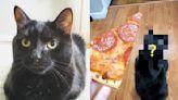 黑貓有需求就做「這動作」 網友全被萌翻啦! | 寵毛網