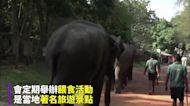 睽違80年的喜悅 斯里蘭卡大象孤兒院喜迎雙胞胎