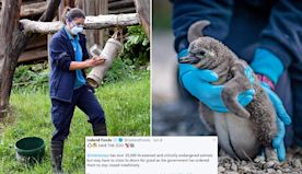 Iceland supermarket adopts Chester Zoo penguins to help save park