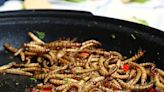 健身族未來新選擇?蛋白質豐富的「麵包蟲」將登歐洲人餐桌:通過歐盟食安機構風險評估