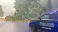 Heavy Flooding and Downed Trees Force Road Closures in Birmingham, Alabama