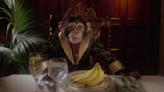 'Borat 2' star Johnny the Monkey has a hilarious fake website
